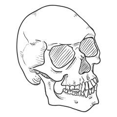 Vector Single Black Sketch Illustration - Human Skull