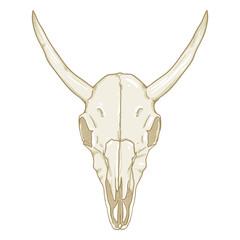 Vector Single Cartoon Illustration - Skull of Bull. Front View.