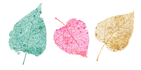 Set of skeletons leaves. Fallen foliage for autumn designs. Natural leaf of aspen and birch. Colored Vector illustration