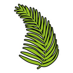 color tropical palm branch leaves plant