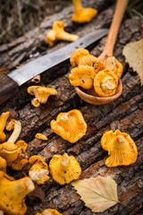 Yellow chanterelle mushrooms on wooden background. Gourmet food.