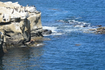 La Holla Shores Cove, San Diego, Ca. Pelican hang out
