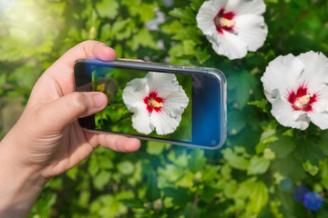 Hands of woman taking pictures of flowers with mobile phone. photography for instagram
