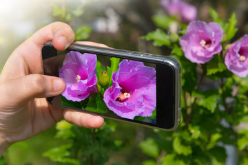The hand of the person taking the picture of flowers on the smartphone