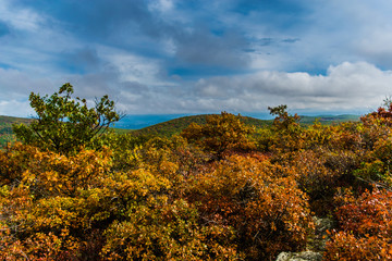 Fall trees on top of a mountain