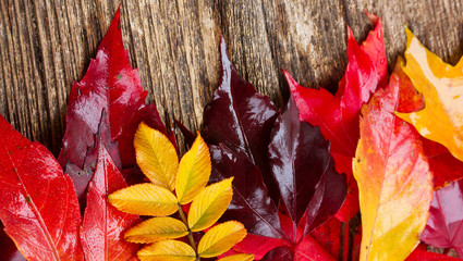Yellow and red Fall leaves border on wooden background banner