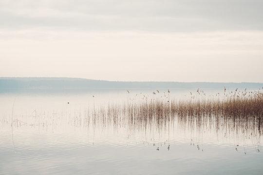 Ruhiges Seeufer am Scharmützelsee in Brandenburg mit Schilf und bedecktem Himmel