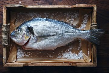 Preparing raw organic fresh fish dorado for baked seafood top view