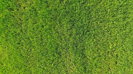 Green fluffy grass texture background Wall mural