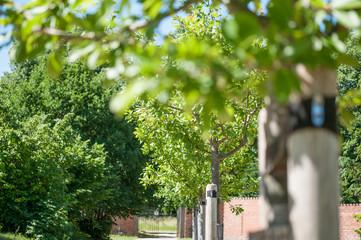 Apfelbaumreihe im Schlosspark Eutin