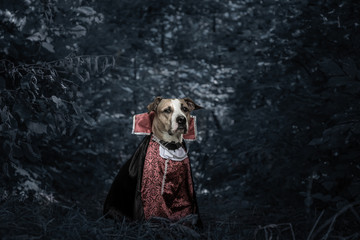 Funny dog dressed up for halloween as dracula vampire in dark moonlit forest. Cute serious staffordshire terrier puppy in costume of scary vampire in the woods, shot in low key