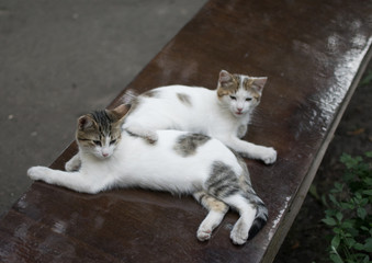 two white cats on a bench in summer