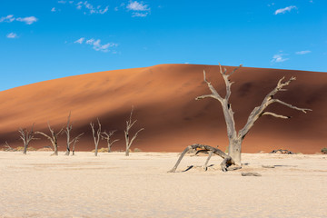 Dead trees and red sand dunes with dramatic cloud shadows on dune, Namibia