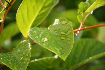 foliage, after the rain, fresh, rainfall, shower, leaf, green, plant, mint, leaves, nature, herb, garden, fresh, peppermint, macro, food, foliage, spring, tree, herbal, natural, forest, close-up