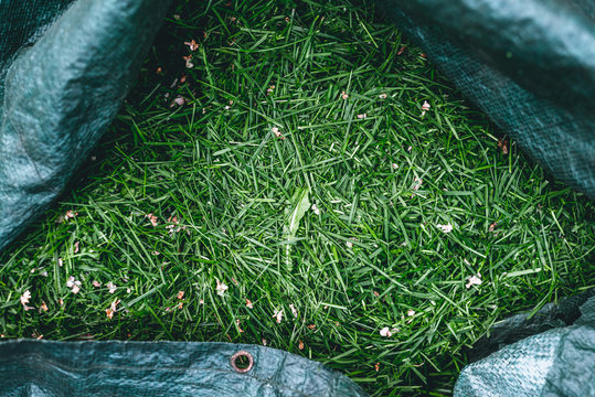 A full sack with freshly cut grass. Working in the garden, mowing the grass.