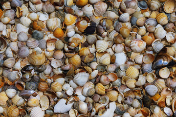 Texture of various sea shells lying on the sand, top view
