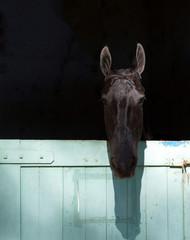 cabeça de cavalo negro em fundo preto, estabulo semi aberto