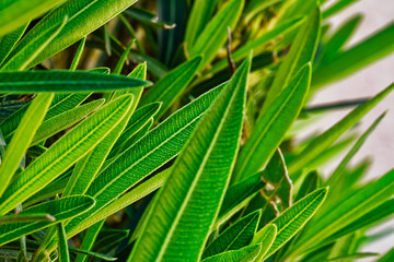 Close-up of leaves on a green shrub