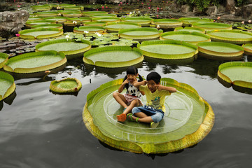 Children pose for a photo on a giant waterlily leaf during an annual leaf-sitting event in Taipei