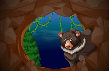 A bear living in cave