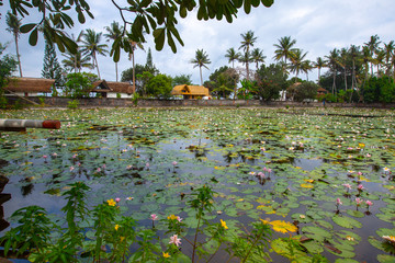 Lotus lake Ujung,Bali island,Indonesia