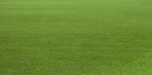 Foto op Canvas Gras Green grass field, green lawn. Green grass for golf course, soccer, football, sport. Green turf grass texture and background for design with copy space for text or image.