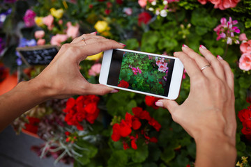 Women's hands holding mobile phone take a photo of flowers. Young woman using smartphone outdoor capture picture of blur colorful flowers. Mobile phone with a touch screen on the background of flowers