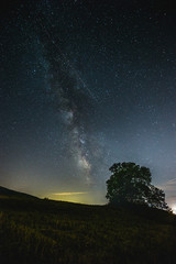 Beautiful view of starred night sky with milky way over a cultivated field with a tree silhouette