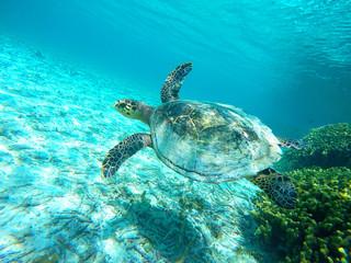 turtle soars in water