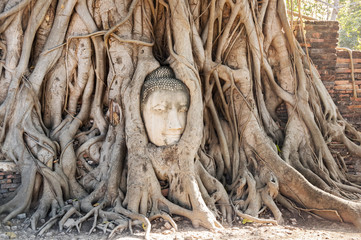 A stone head of Buddha in Wat Prha Mahathat Temple