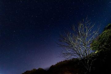 Stars/tree
