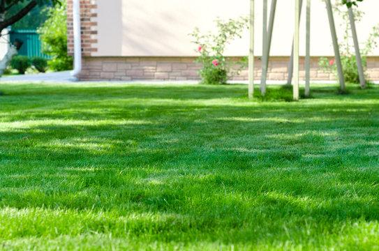 green lawn backyard house