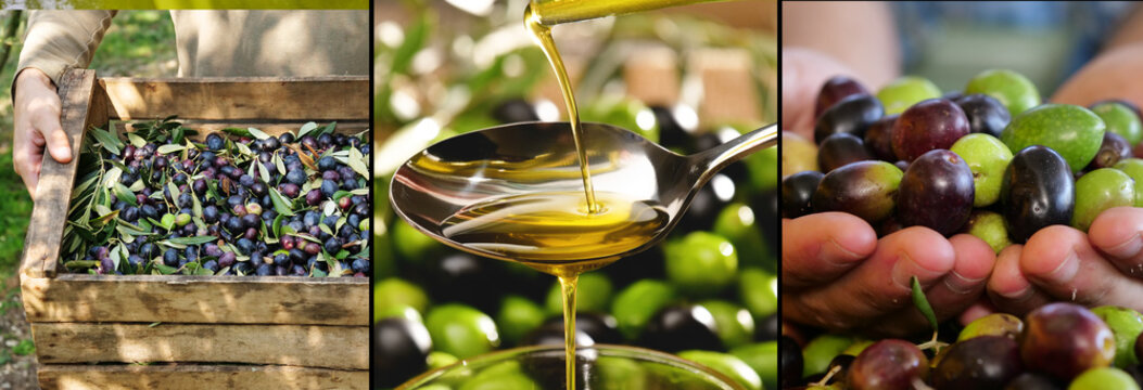 composition of Italian oil and olives, concept of bio food and genuine food. Italian olive groves and tradition and passion for ancient work.