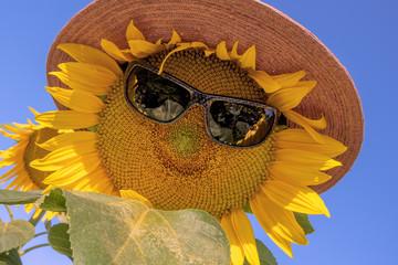lustige Sonnenblumen mit Sonnenbrille und Hut