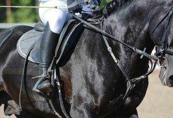 Equestrian sport in details. Sport horse and rider on gallop