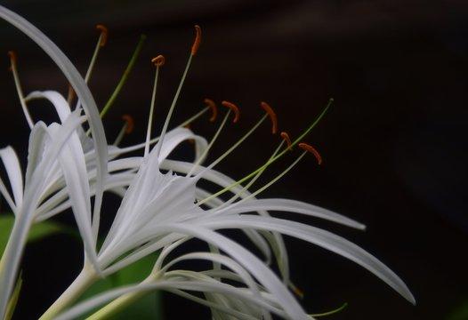Weiße exotische Blüten in einem botanischen Garten