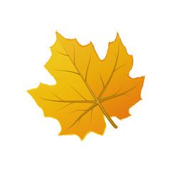 Cute orange autumn leaf isolated on white