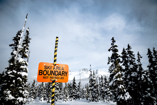 Whisky Jack bird sitting atop a ski boundary sign with Blackcomb Mountain in the background.
