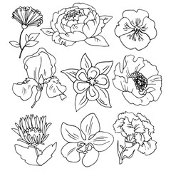 Different flowers vector set of line drawings for design and illustration.