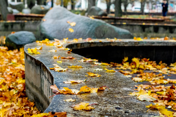 Wet yellow autumn leaves on the ground in the city park during the rain_