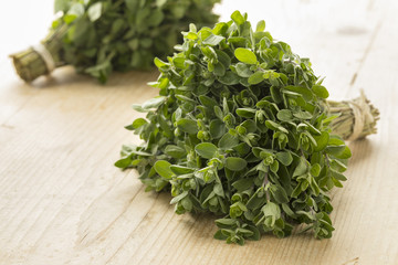 Papiers peints Condiment Bunch of fresh picked marjoram