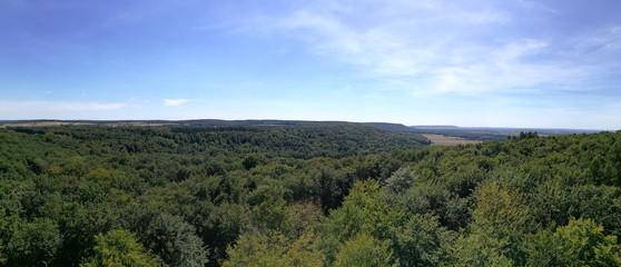 Panorama Wald