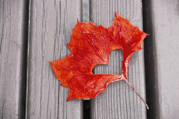 Red maple leaf with cut out heart close-up on wooden background, Autumn background