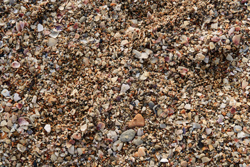 Texture of large sand on the beach with a lot of broken shells and small kilometers on a sunny summer day for a background image