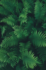 Fern Leaves From Above