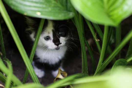 A stray kitten hides in the bushes.
