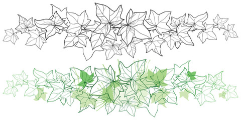 Vector horizontal border of outline bunch Ivy or Hedera vine. Ornate leaf of Ivy in black and pastel green isolated on white background. Climbing contour plant for summer design or coloring book.