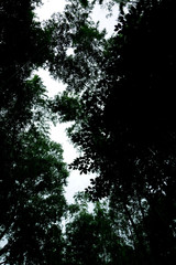 空を見上げる 暗い風景 森 Dark landscape looking up at the sky Forest