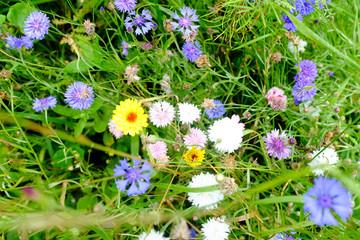 Wiesenblumen im Sommer
