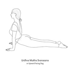 Urdhva Mukha Svanasana or Upward Facing Dog. Vector.